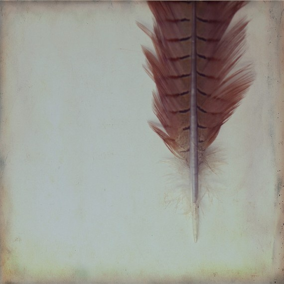 marsala feather